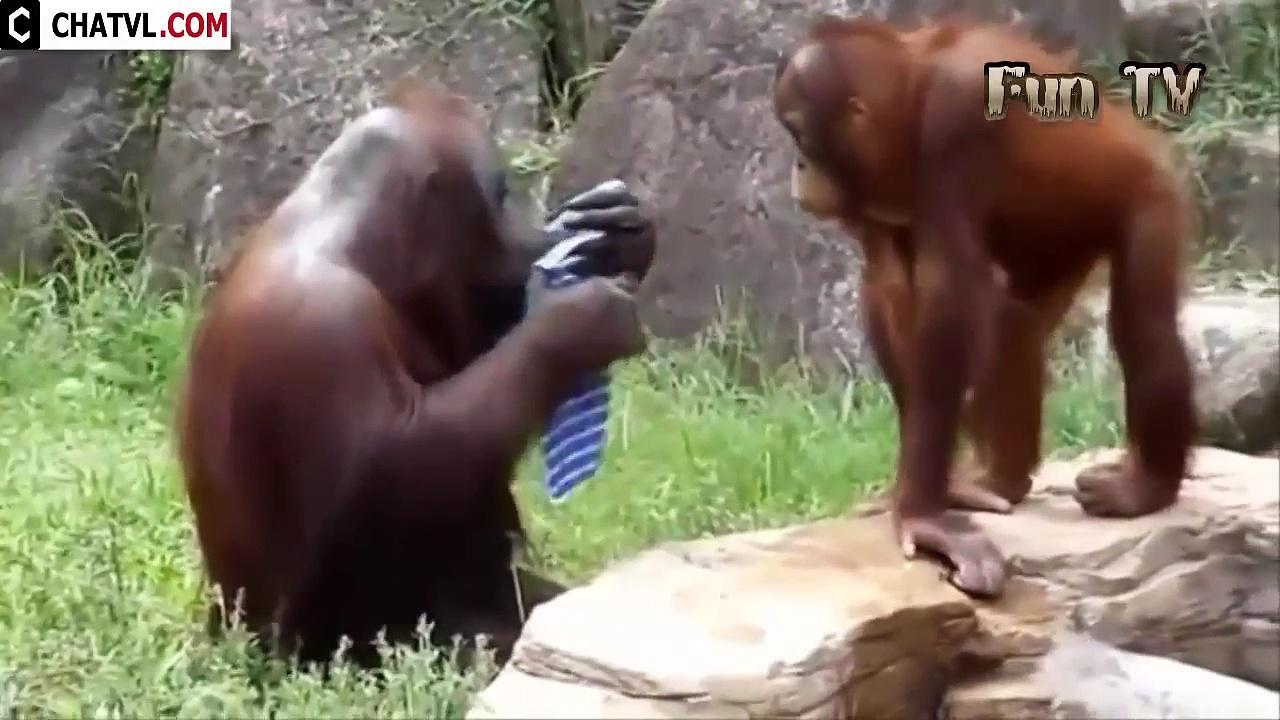 Funny-Videos-Funny-Animal-Best-compilation-2015-21